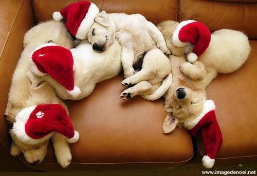 Image de Noël: Chien de Noël