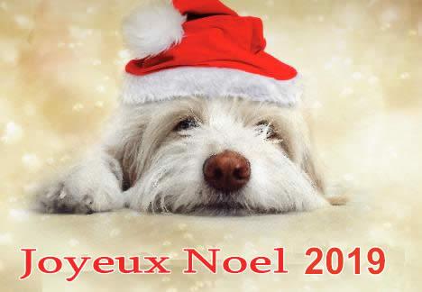 Image de Noël: Chien Noël 2019