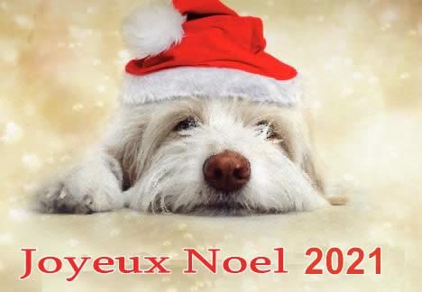 Image de Noël: Chien Noël 2021