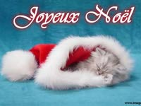 image-de-noel-cat